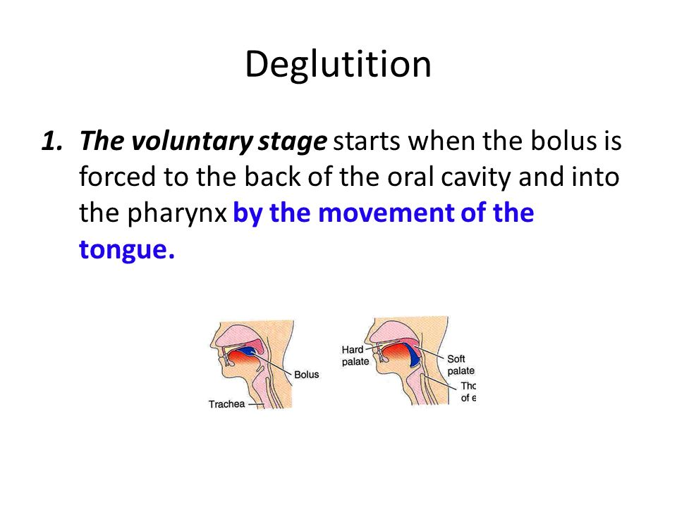 Deglutition The voluntary stage starts when the bolus is forced to the back of the oral cavity and into the pharynx by the movement of the tongue.