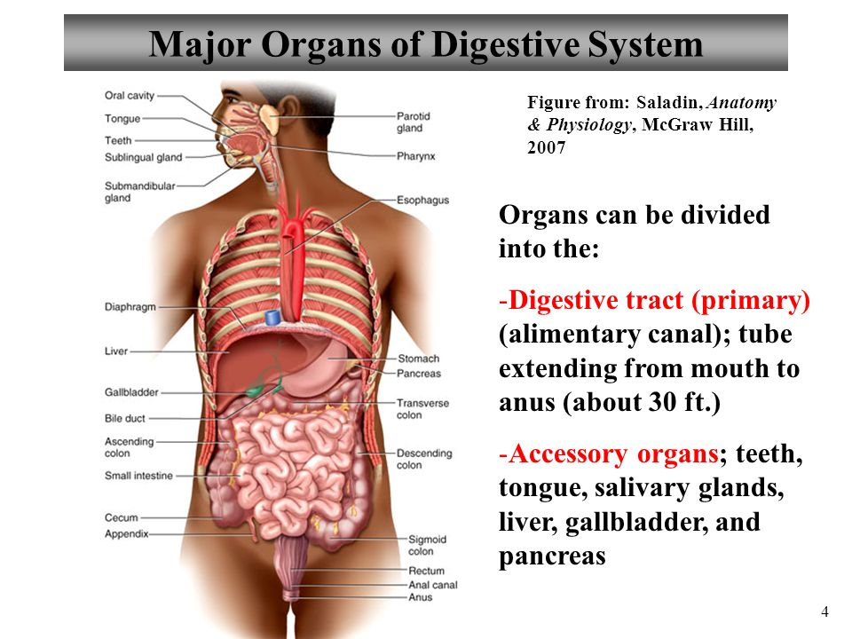 Anatomy and physiology chapter 21 digestive system i ii ppt major organs of digestive system ccuart Image collections