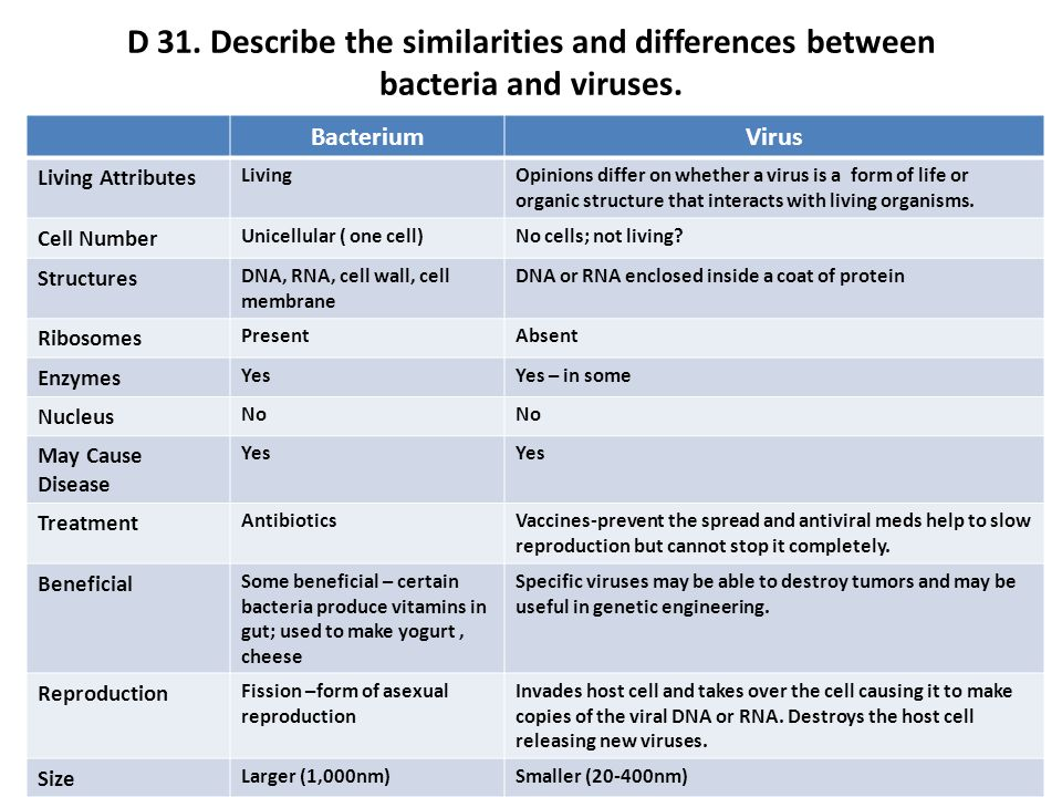 difference between bacteria and virus structure