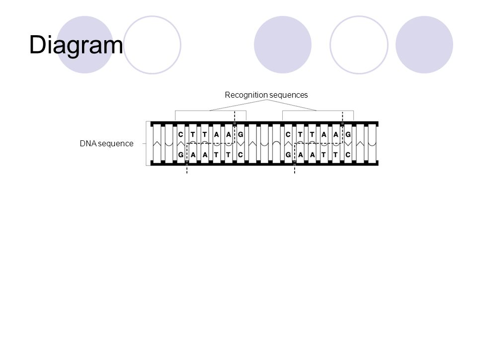 Recognition sequences