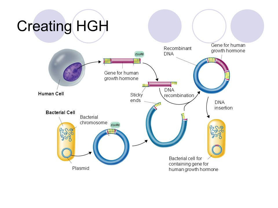 Creating HGH Gene for human growth hormone Recombinant DNA