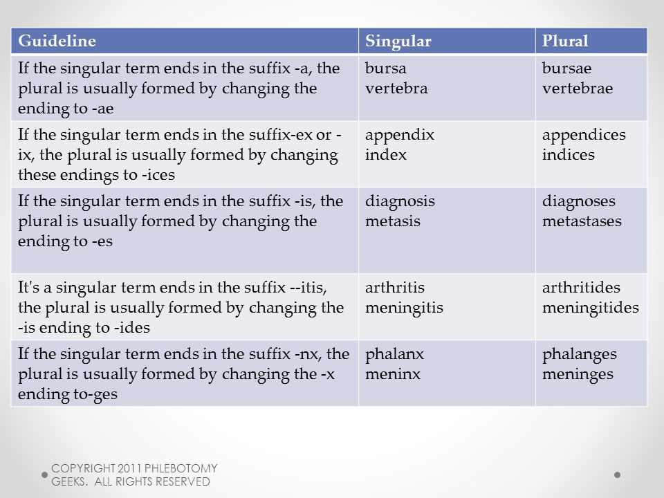 20 Guideline Singular Plural
