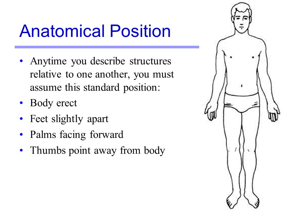 Language Of Anatomy Pg Ppt Download