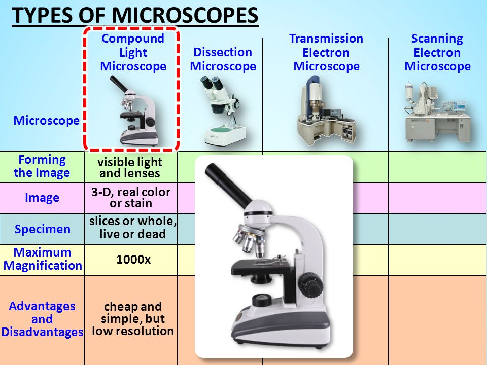 TYPES OF MICROSCOPES Compound Light Microscope
