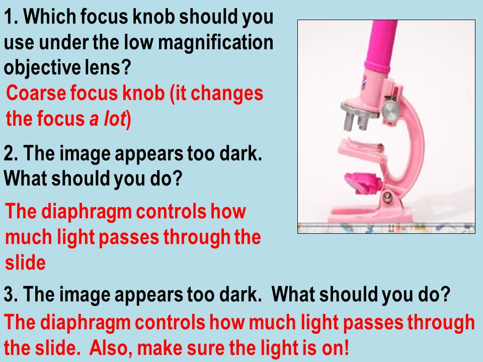 1. Which focus knob should you use under the low magnification objective lens