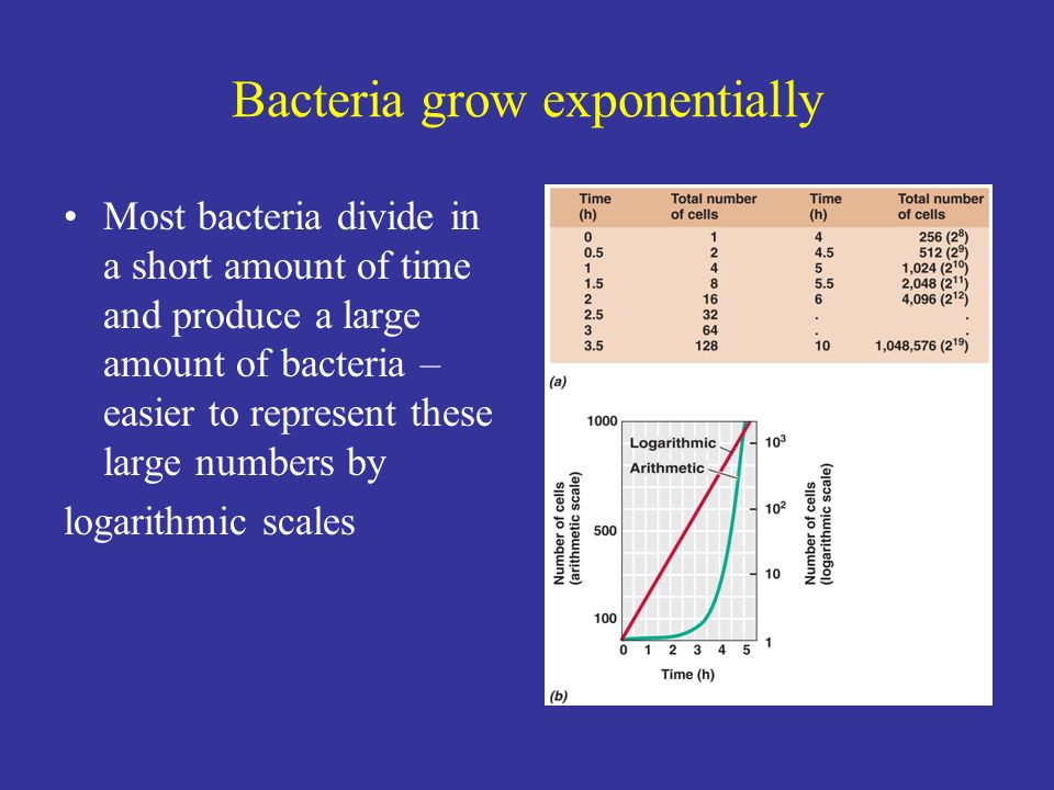 Bacteria grow exponentially