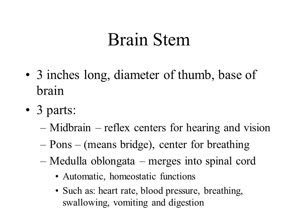 Brain Stem 3 inches long, diameter of thumb, base of brain 3 parts: