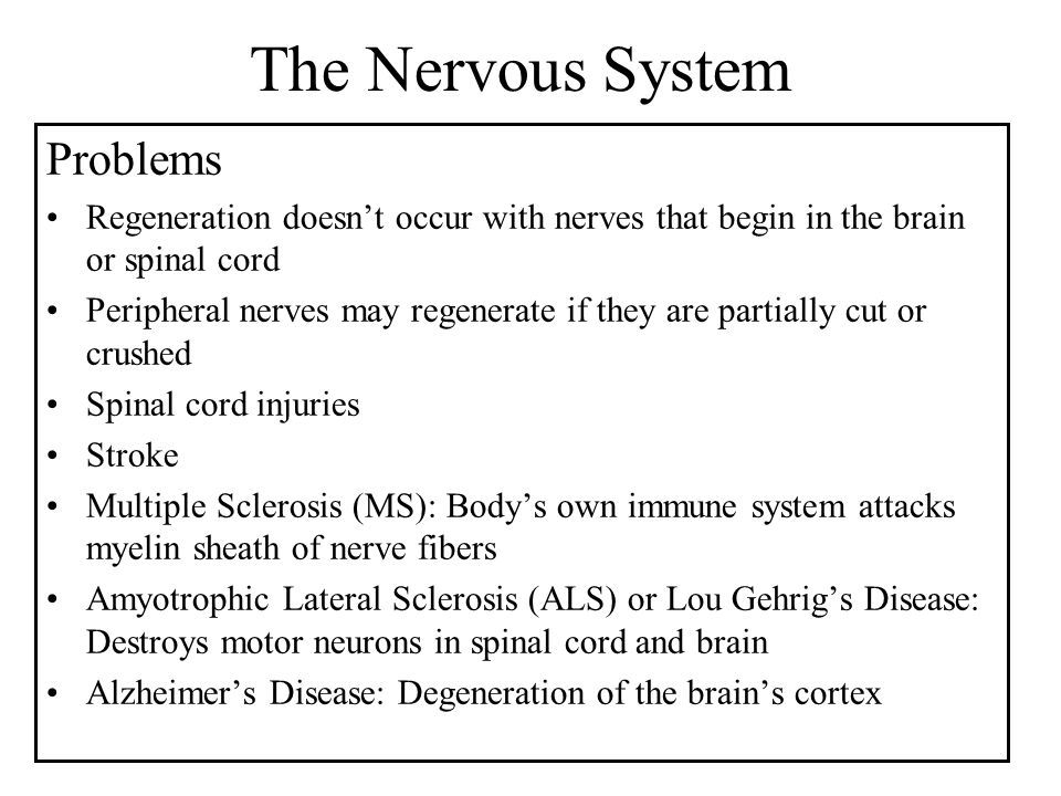 The Nervous System Problems