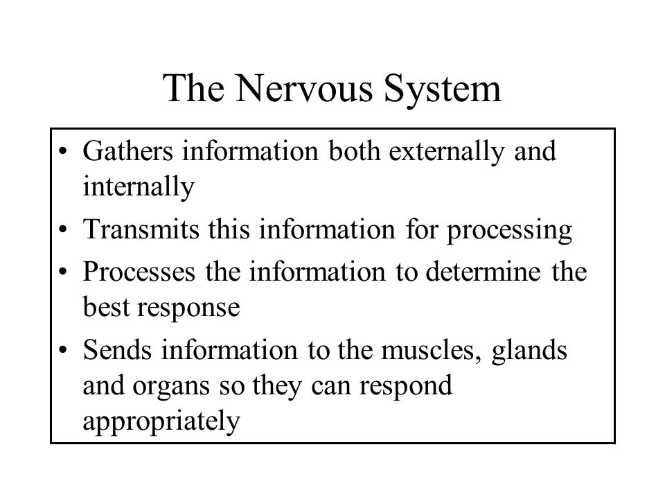 The Nervous System Gathers information both externally and internally