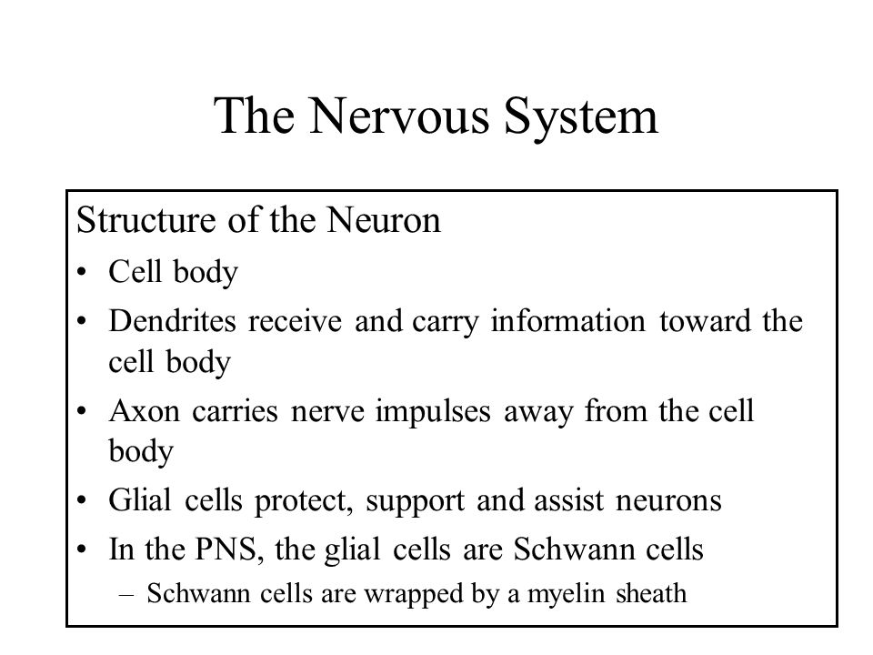 The Nervous System Structure of the Neuron Cell body