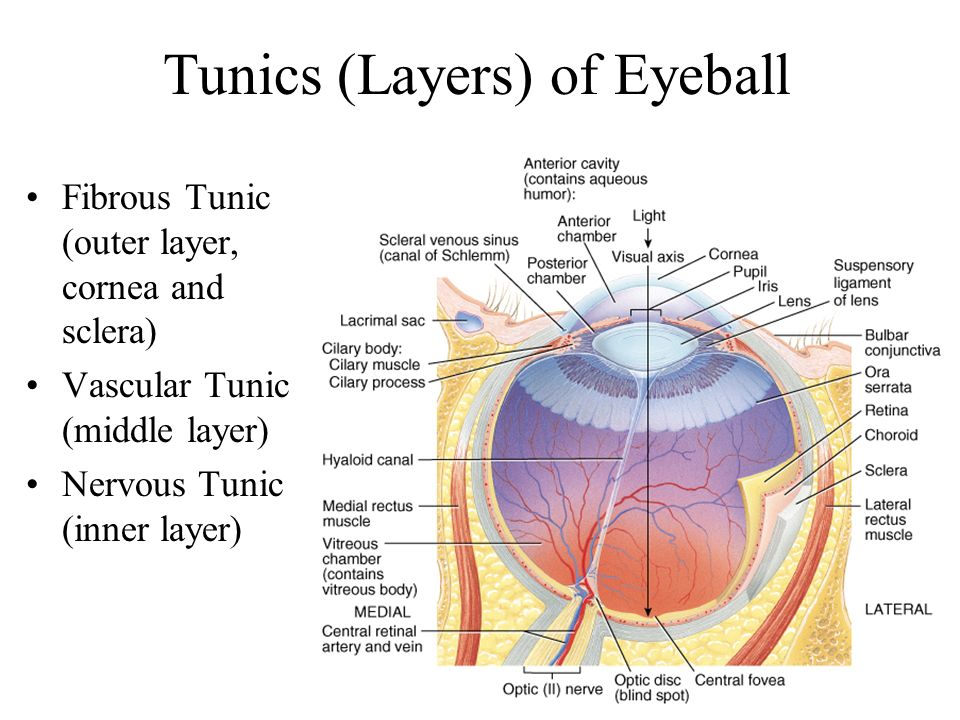 Tunics (Layers) of Eyeball
