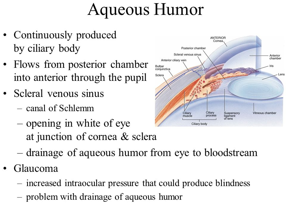 Aqueous Humor Continuously produced by ciliary body