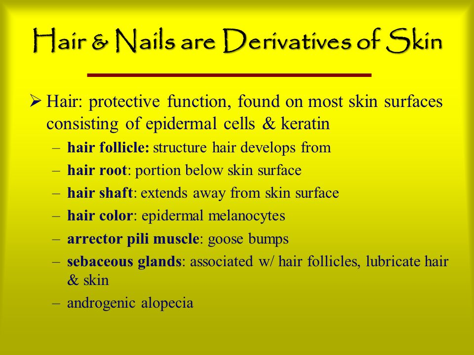 Hair & Nails are Derivatives of Skin