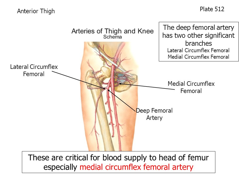 femoral artery blood flow - 960×720