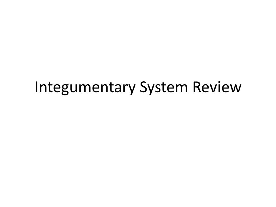 Integumentary System Review