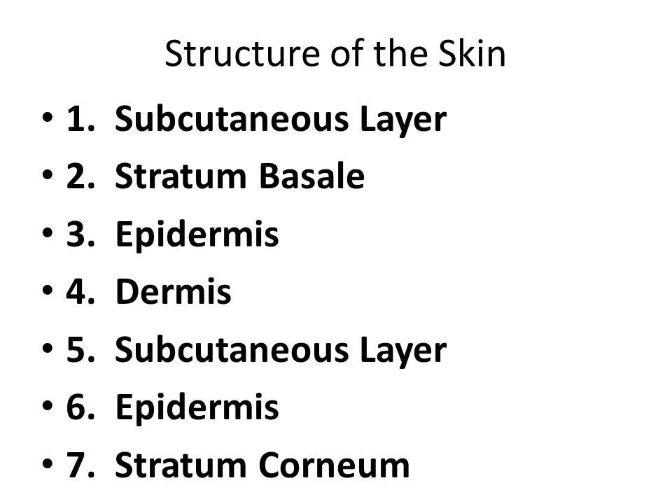 Structure of the Skin 1. Subcutaneous Layer 2. Stratum Basale