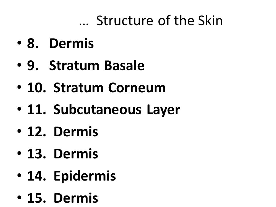 … Structure of the Skin 8. Dermis. 9. Stratum Basale. 10. Stratum Corneum. 11. Subcutaneous Layer.