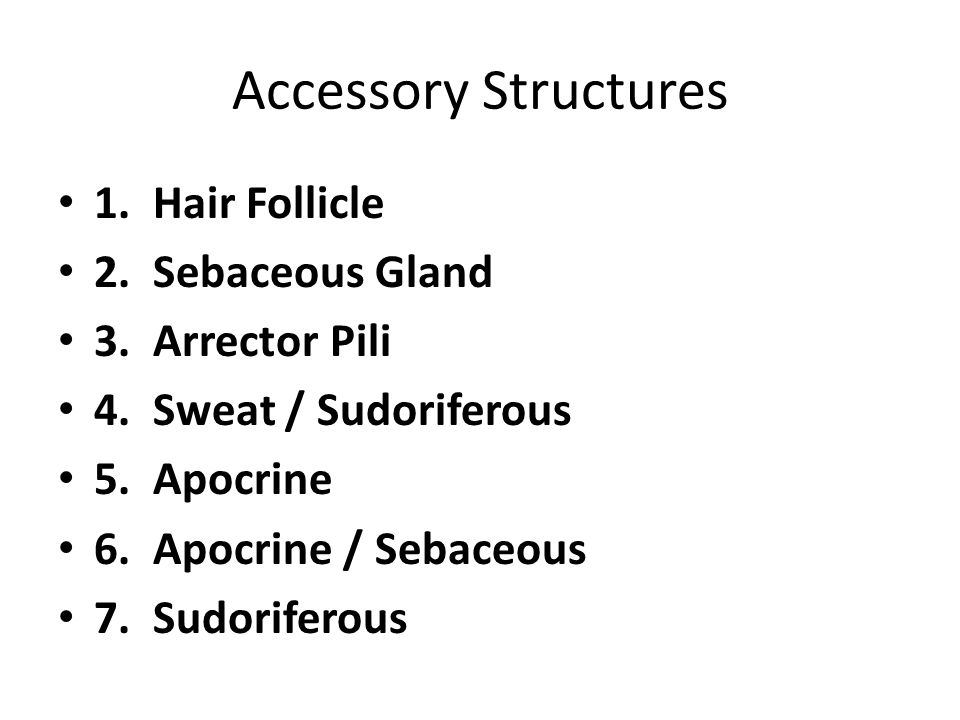 Accessory Structures 1. Hair Follicle 2. Sebaceous Gland