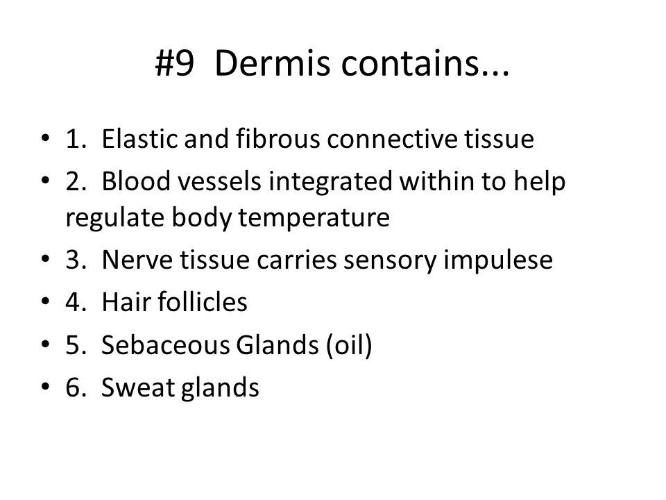 #9 Dermis contains Elastic and fibrous connective tissue