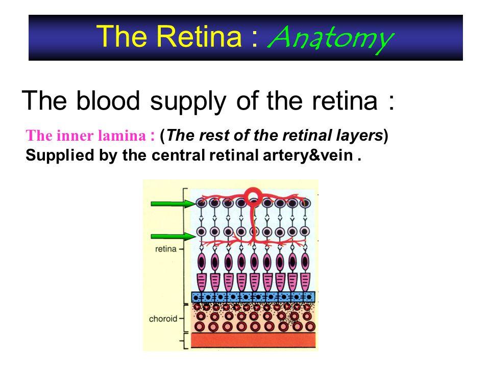 Contemporary Retina Anatomy Ppt Motif - Anatomy And Physiology ...