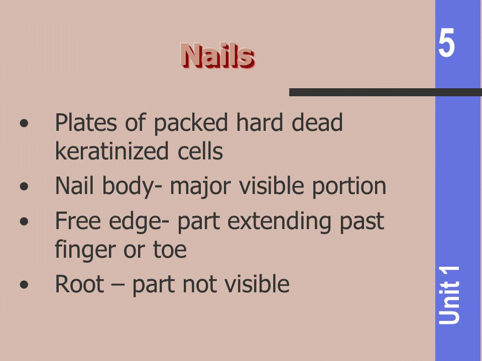 Nails Plates of packed hard dead keratinized cells