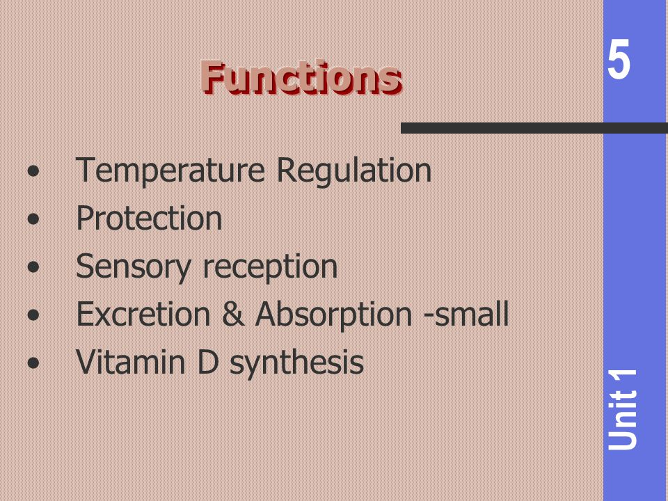 Functions Temperature Regulation Protection Sensory reception