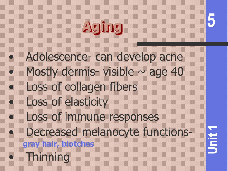 Aging Adolescence- can develop acne Mostly dermis- visible ~ age 40