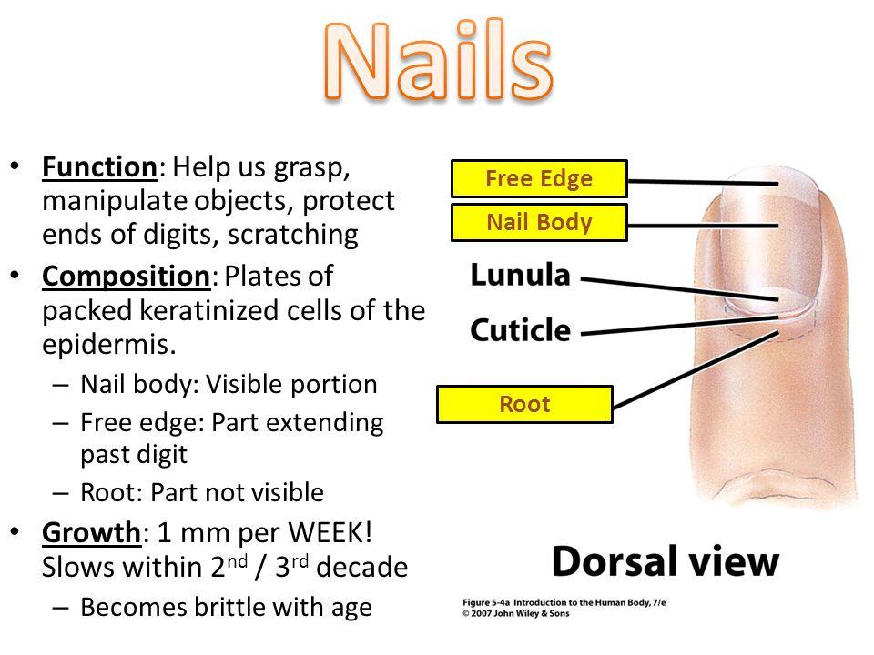 14 Nails
