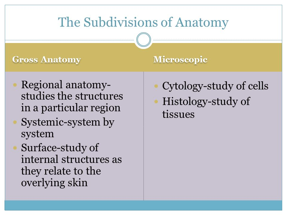 Overview Of Anatomy And Physiology Ppt Video Online Download