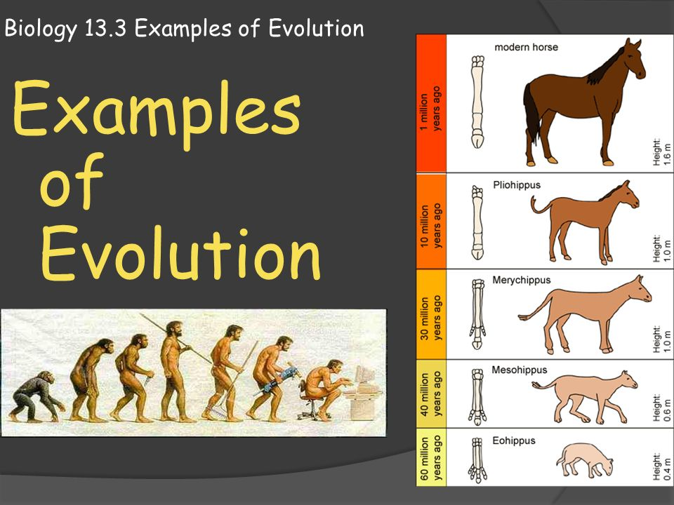 Ppt biology 13. 3 examples of evolution powerpoint presentation.