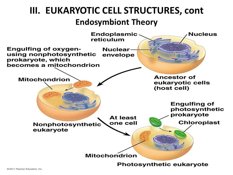 unit iii cell structure function ppt download