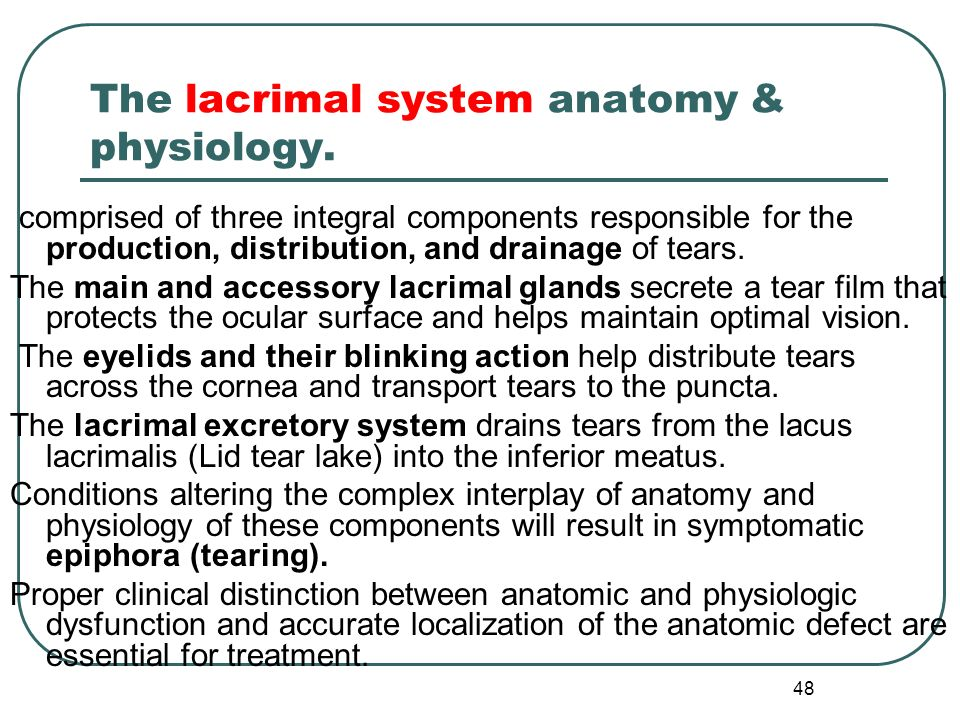 Eyelids & lacrimal apparatus - ppt video online download
