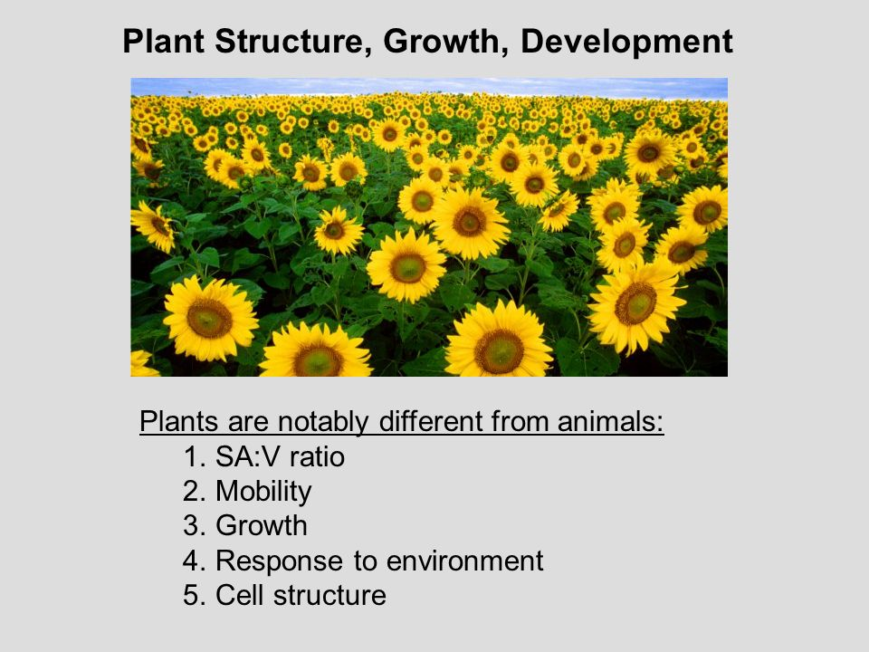 Plant Structure, Growth, Development
