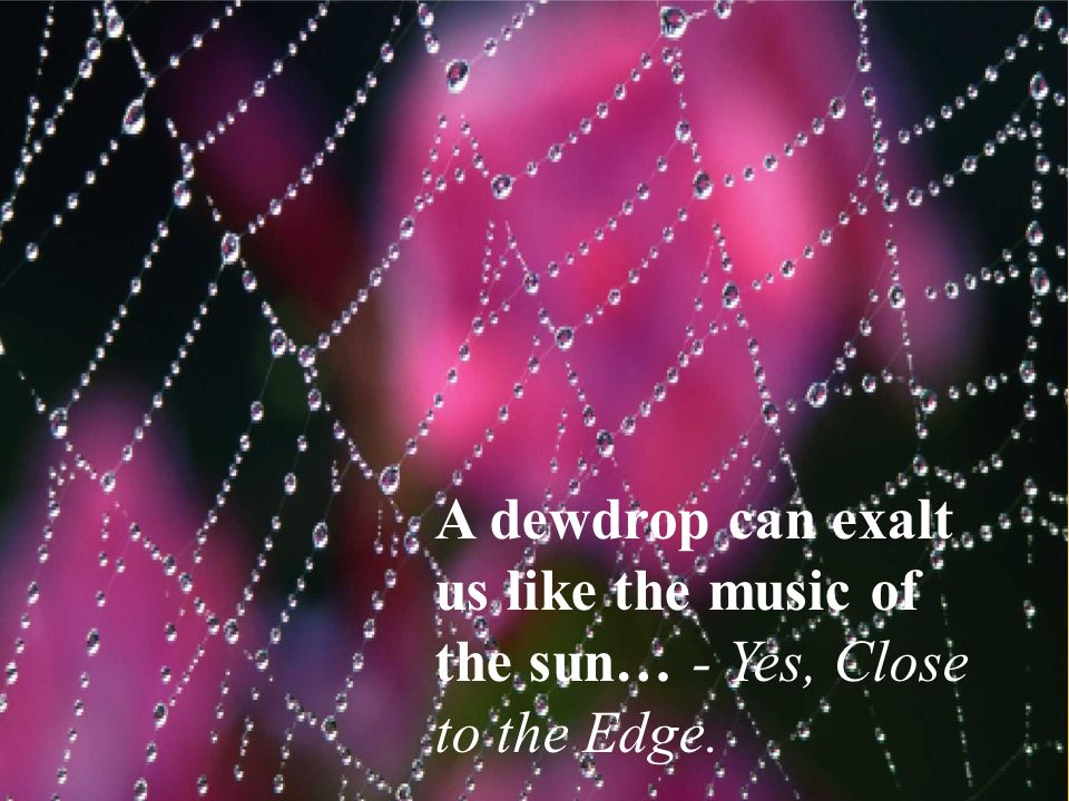 A dewdrop can exalt us like the music of the sun… - Yes, Close to the Edge.