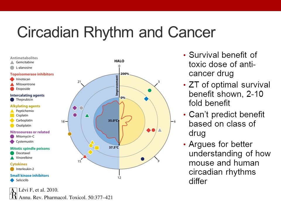 Cancer and circadian rhythm–Nobel Prize research shows how body clocks can turn back disease