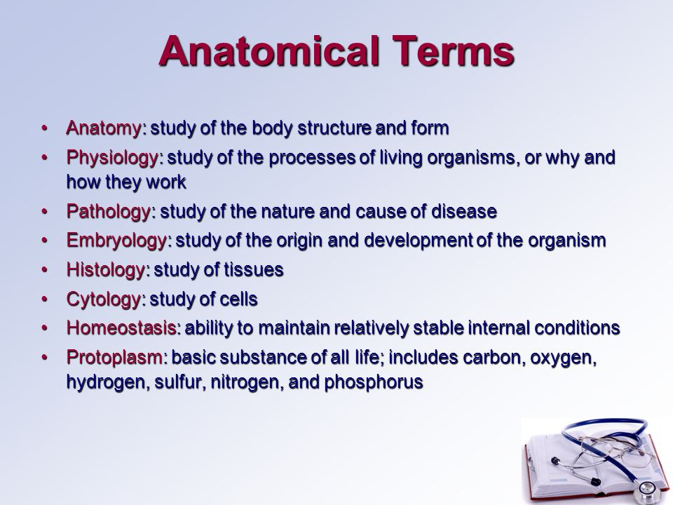 Human Anatomy Basic Structure Ppt Video Online Download