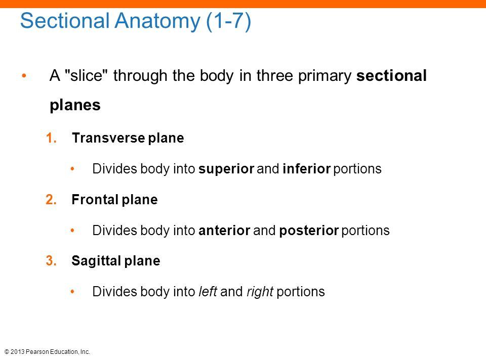 Nice Transverse Plane Anatomy Embellishment - Anatomy And Physiology ...