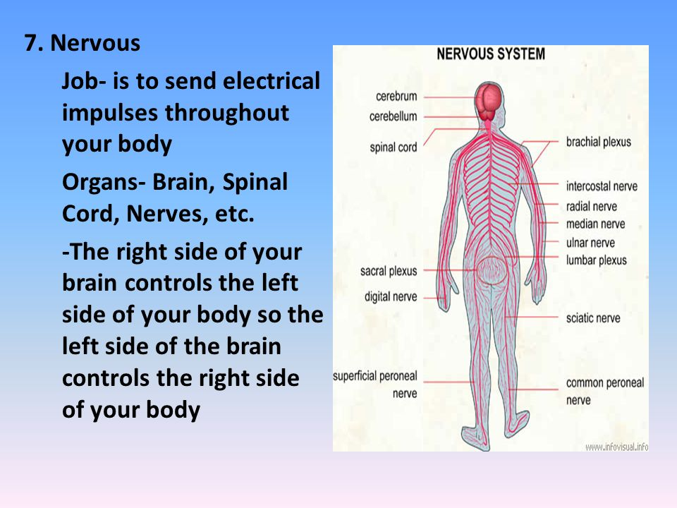 Over View Of The Human Body Ppt Video Online Download