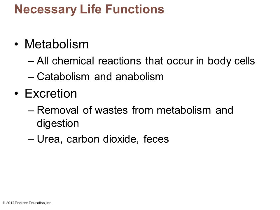 Fein Necessary Life Functions Anatomy And Physiology Galerie ...