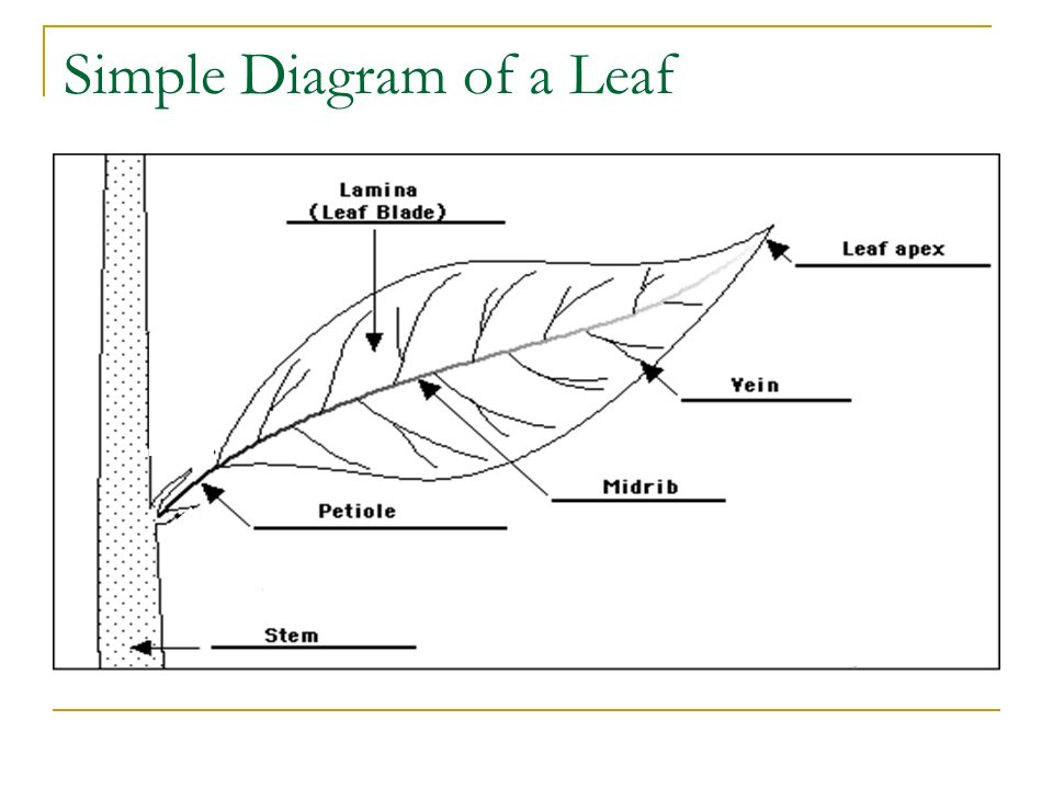 Photosynthesis step grade ppt video online download 2 simple diagram ccuart Image collections