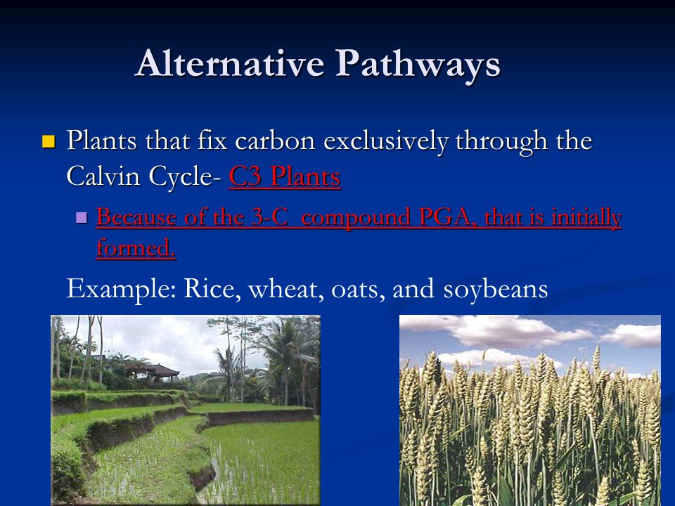 Dark Reaction The Calvin Cycle Ppt Video Online Download