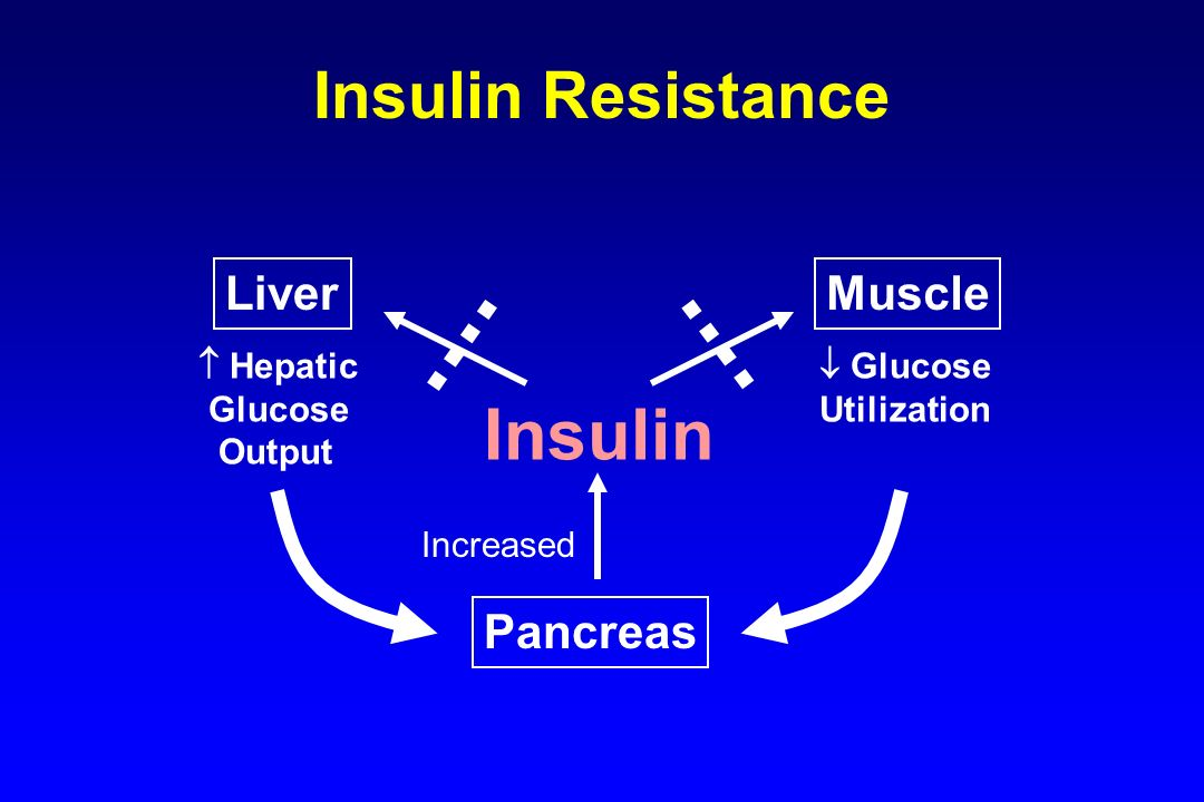 Insulin Insulin Resistance Liver Muscle Pancreas  Hepatic Glucose