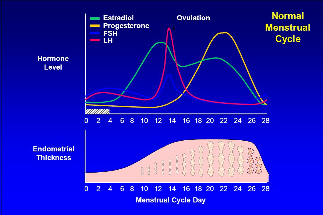 Normal Menstrual Cycle Endometrial Thickness