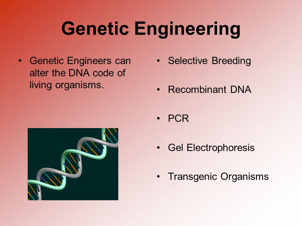 Genetic Engineering Genetic Engineers can alter the DNA code of living organisms. Selective Breeding.