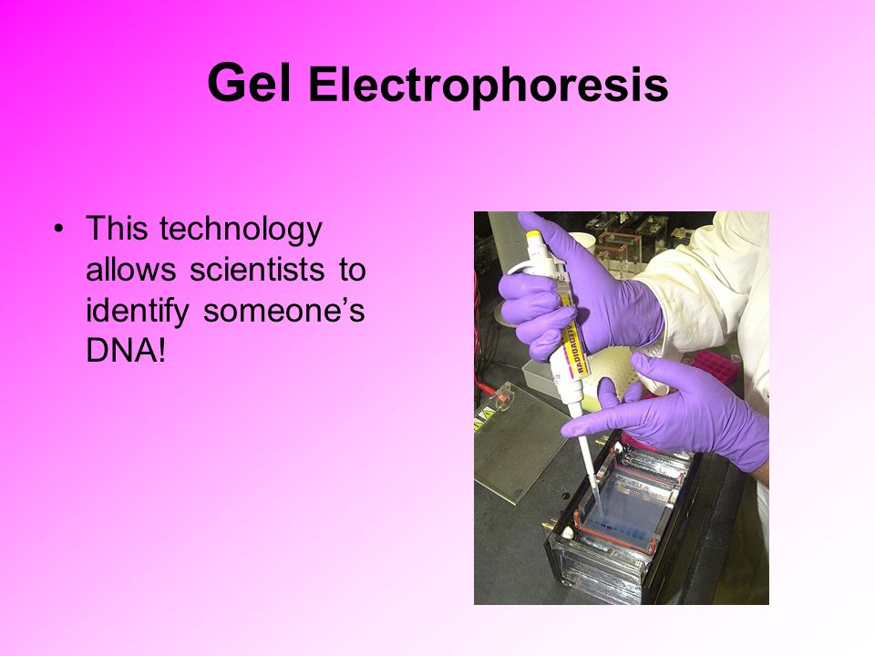 Gel Electrophoresis This technology allows scientists to identify someone's DNA!