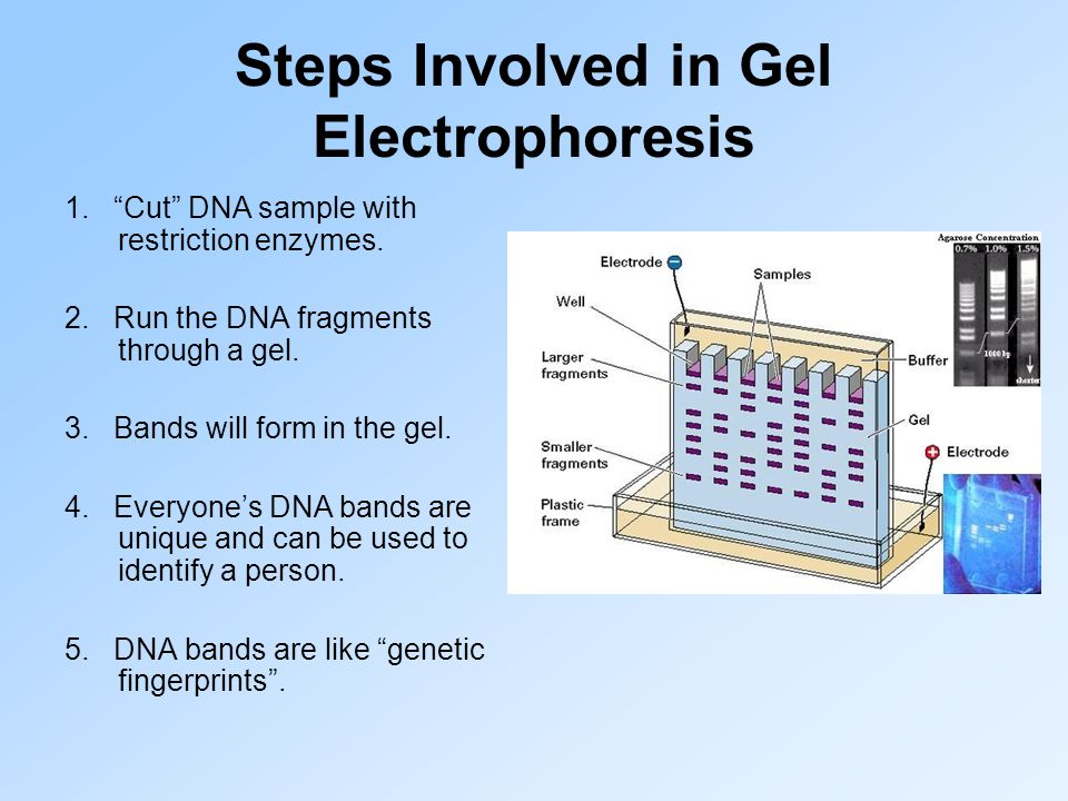 Steps Involved in Gel Electrophoresis