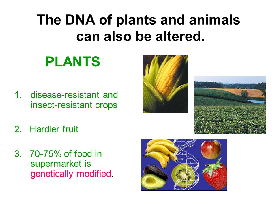The DNA of plants and animals can also be altered.