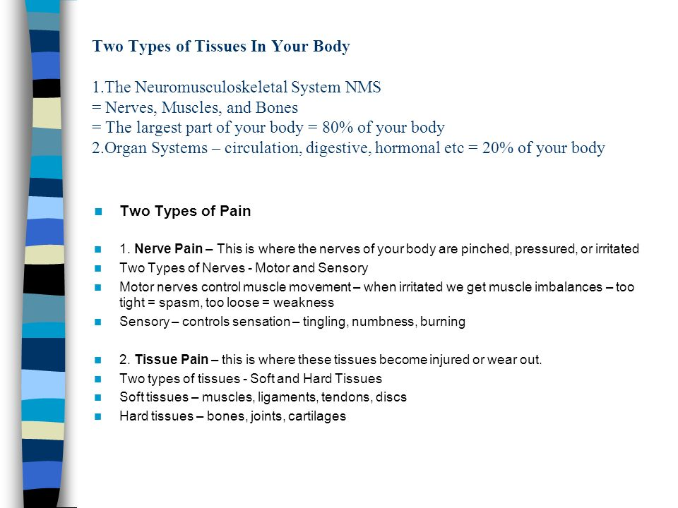 Two Types of Tissues In Your Body 1