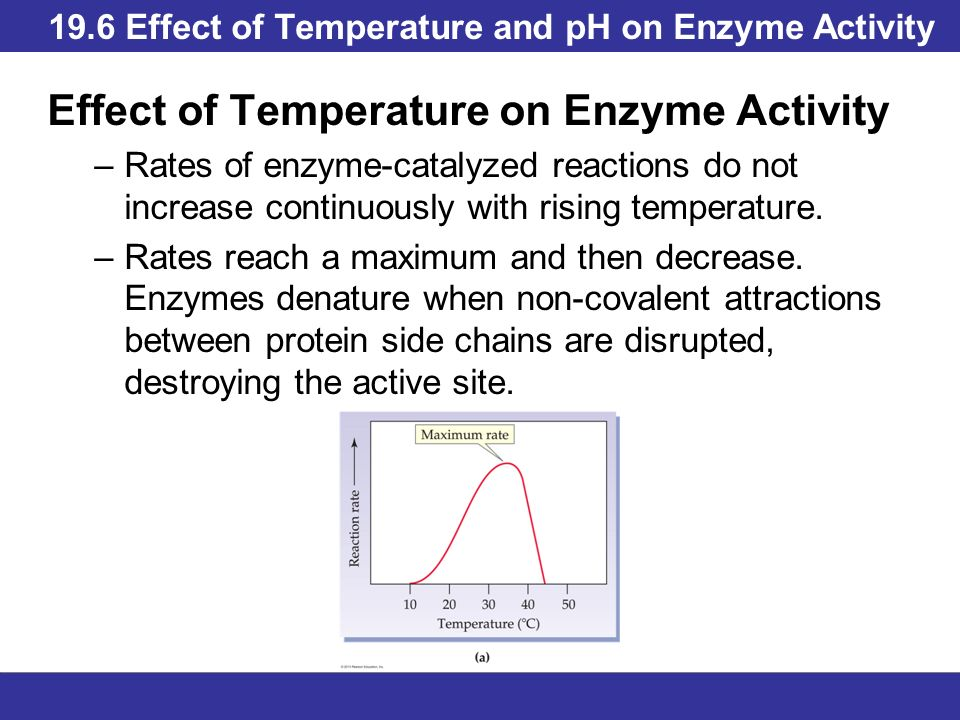 how does ph level affect enzyme activity A ph of about 7 is the optimum and as the ph moves further away from the optimum ph the enzyme activity starts to slow down every enzyme shows highest activity at a specific temperature which is called the optimum temperature.