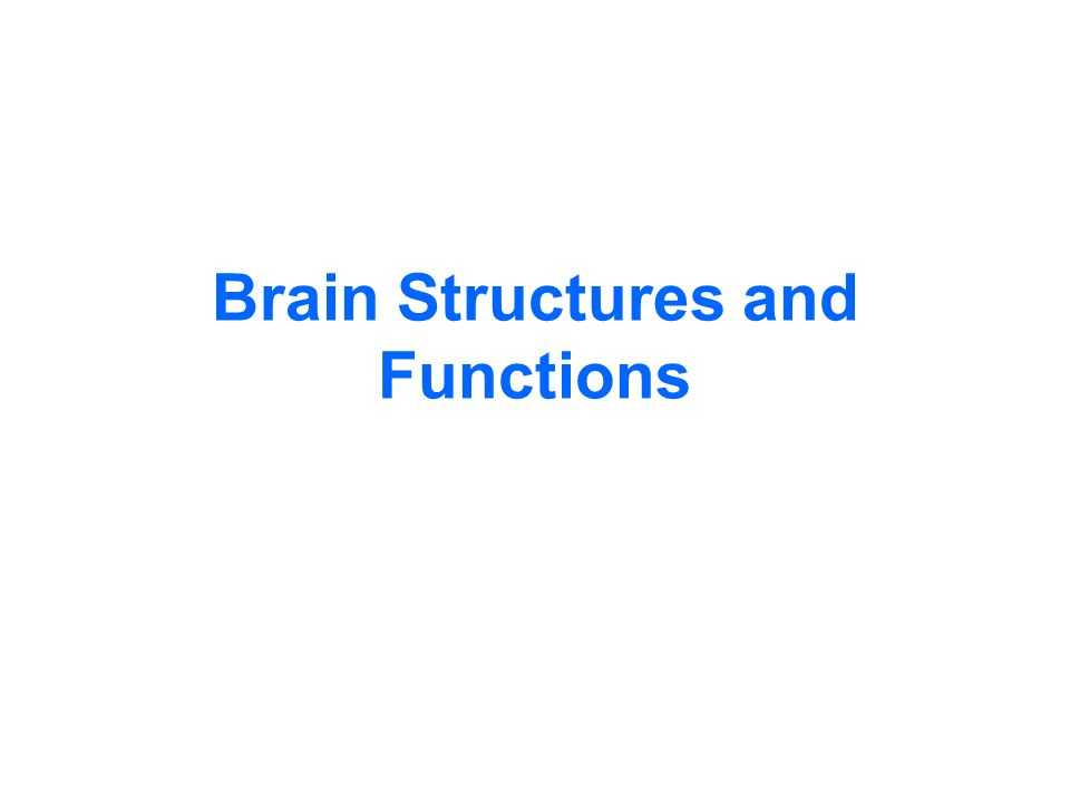 Brain Structures and Functions